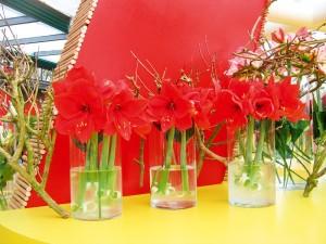 Hippeastrum in vaze transparente