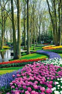 Grădinile Keukenhof sunt paradisul lalelelor olandeze