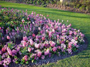 rond cu flori mov si roz