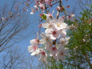 Flori primăvara în grădină