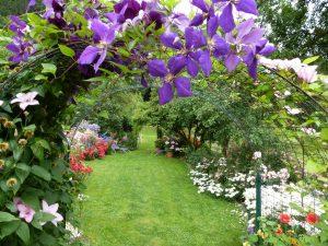 Violetul în grădină