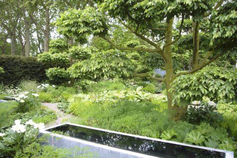 Pietrele te ajută să creezi aranjamente originale în grădină