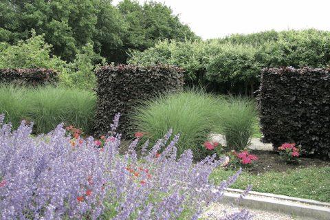 Contraste plăcute în grădină
