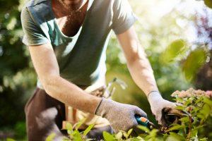 5 trucuri simple ca să-ți protejezi grădina tot anul