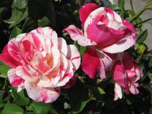 Flori rare în grădină