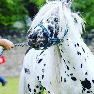 (P) Poneii reiau spectacolul ecvestru la Karpatia Pony Show 2018, ediția a II-a