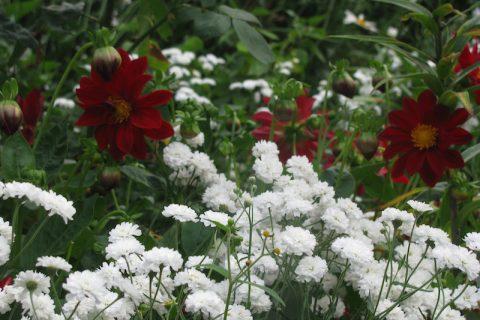 Aranjamente cu flori pe… pat de flori