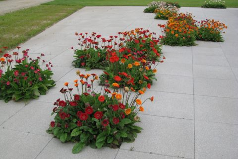 Creează zone de interes cu insule de flori!