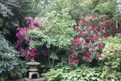Grădina japoneză din Praga
